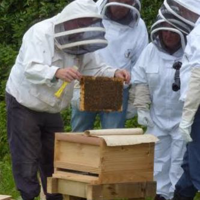 Beekeeping with Cheshire Wildlife Trust